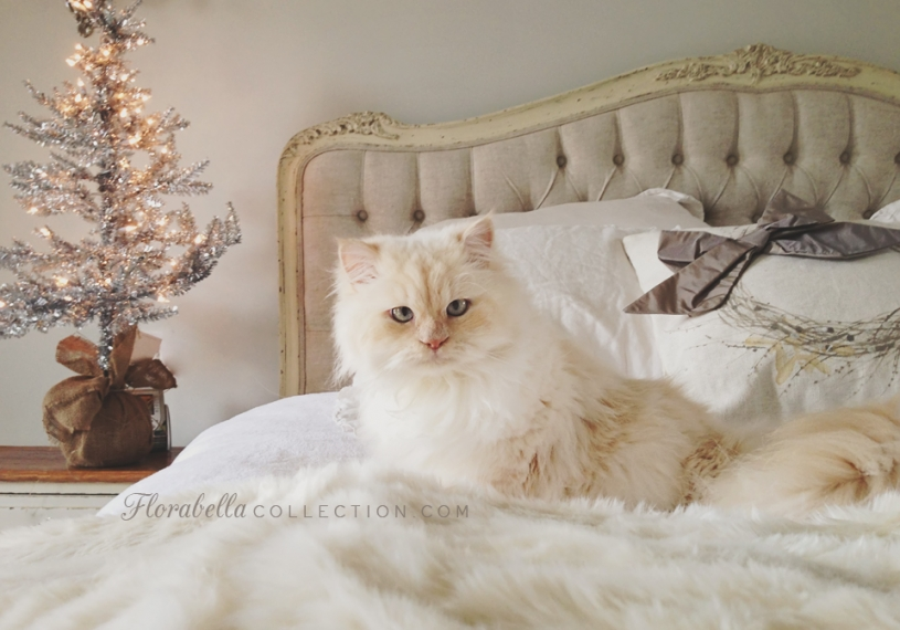 Florabella Himalayan kitty Christmas Decor